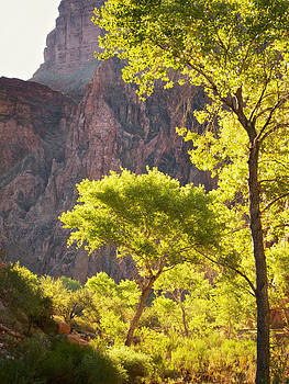 Mary Lee Dereske - Morning Light on Trees at the Bottom of the Grand Canyon