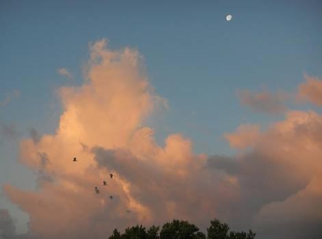 Morning Moon by Susan Sidorski