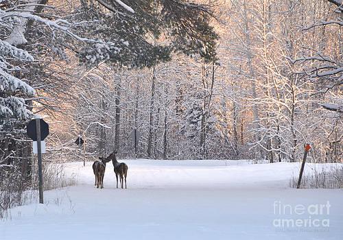 Morning Nuzzle by Marianne Kuzimski