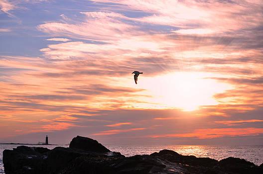 Emily Stauring - Morning Seagull