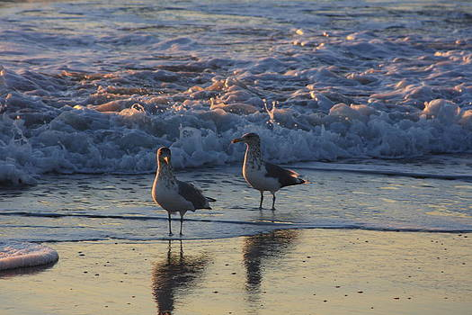 Morning Seagulls by Michael Smith