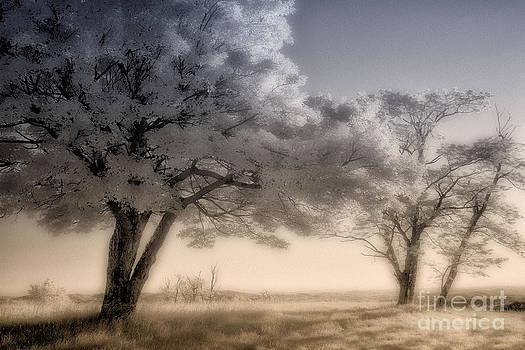 Morning Softness II - Blue Ridge Parkway by Dan Carmichael
