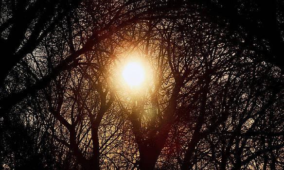 Jon Baldwin  Art - Morning Sun