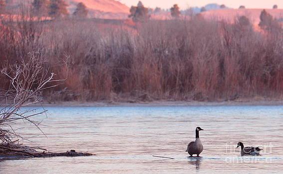 Birches Photography - Morning Swim