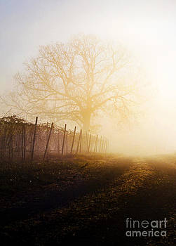 Morning Vineyard by Shannon Beck-Coatney