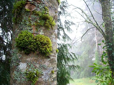 Moss and Lichen by Tanya  Searcy