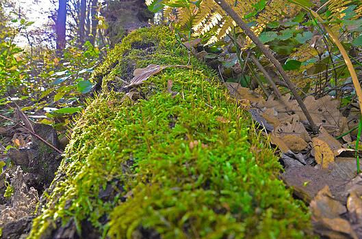 Moss by Kivanc Ekinci