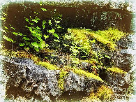 Dan Carmichael - Moss Rocks