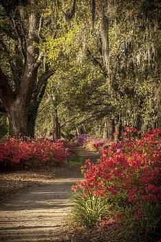 Moss Trail by Steve DuPree
