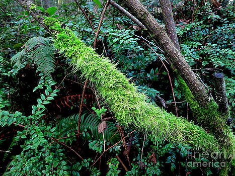 Mossy Branch by Tanya  Searcy