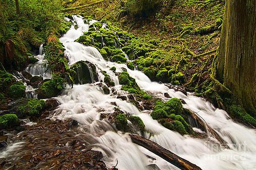 Jamie Pham - Mossy River flowing.