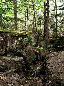 Michelle Calkins - Mossy Rocks in the Forest