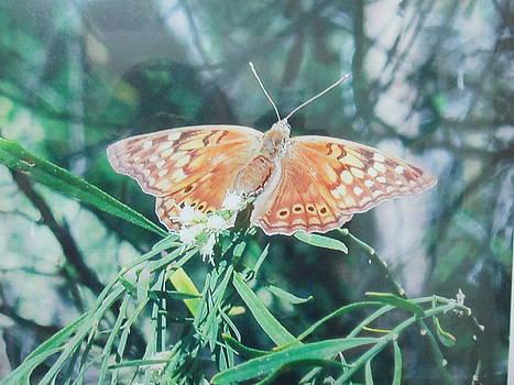 Moth by Rosalie Klidies