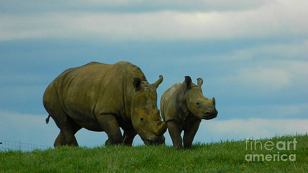 Mother and Baby Rhino by K L Roberts