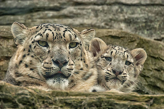 Mother and cub by Chris Boulton