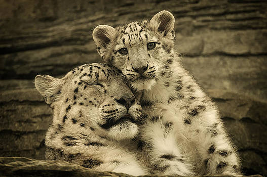 Mother's Love by Chris Boulton