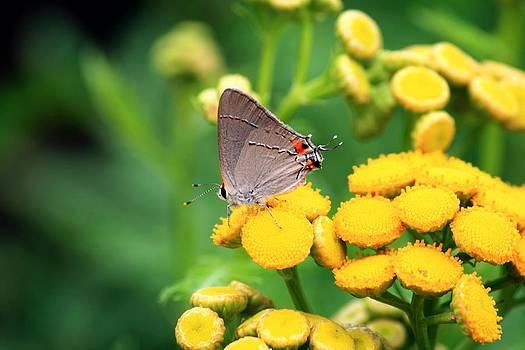 Mothra by Matthew Grice