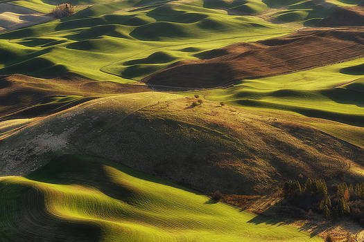 Mounds of Joy by Ryan Manuel