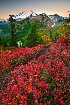 Mount Baker Sunrise by David  Forster