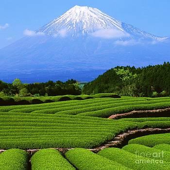 Roberto Prusso - Mount Fuji