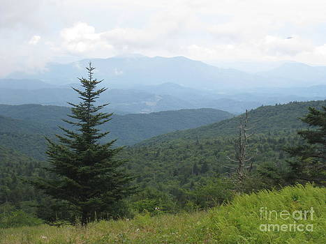 Mount Rogers National Scenic Area by Steve Gass