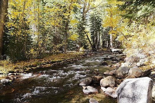 Mountain Creek by David Winge