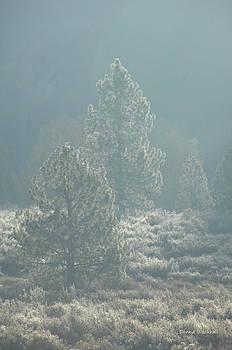 Donna Blackhall - Mountain Frost