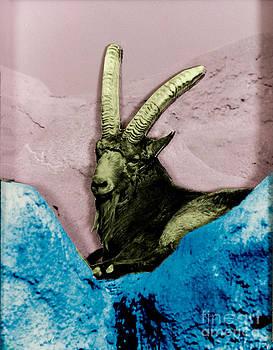Jeanette K - Mountain Goat