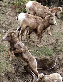 Gail Matthews - Mountain Goat Leap of Faith