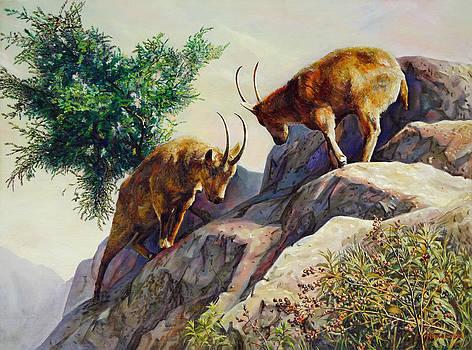Mountain Goats - Powerful Fight  by Svitozar Nenyuk
