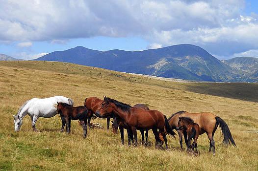 Mountain Horses by Cosmin Bicu