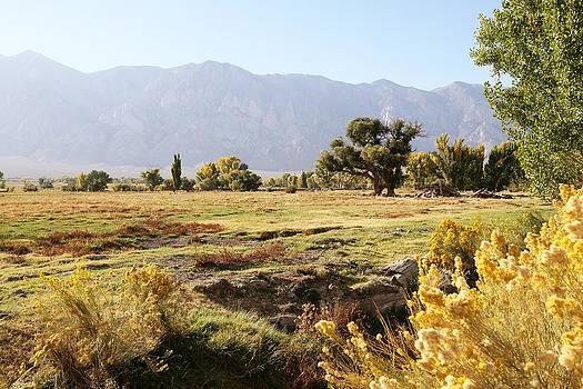 Mountain Meadow by David Winge