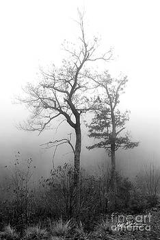Jeff McJunkin - Mountain Mist