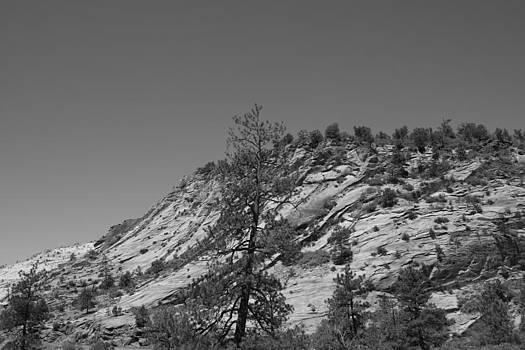 Mountain Path by Kimberly Oegerle