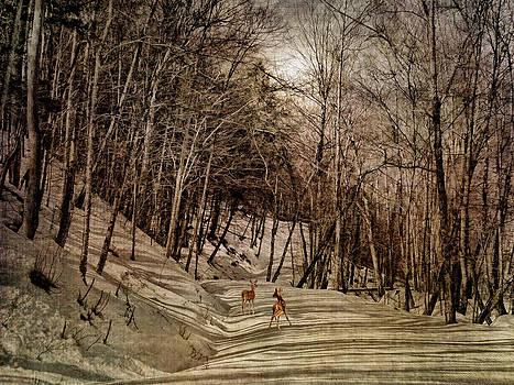 Pamela Phelps - Mountain Path