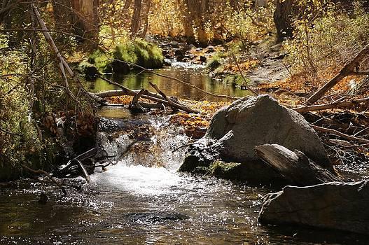 Mountain Stream by David Winge