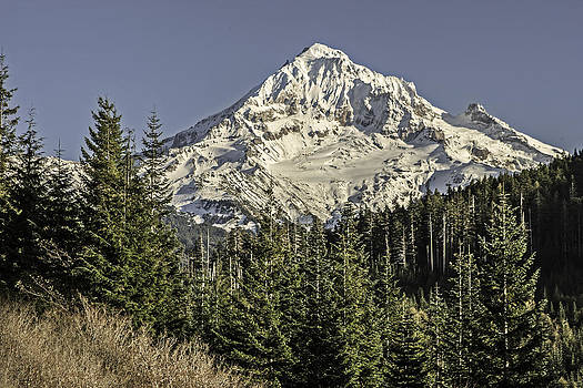 Mountain View by Judi Baker