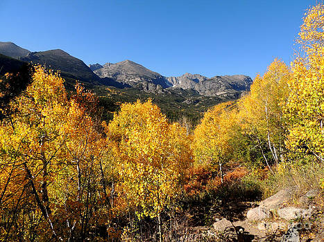 Mountains and Aspens by Deniece Platt