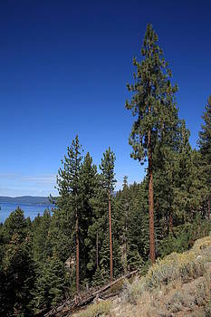 Frank Romeo - Mountainside near Lake Tahoe