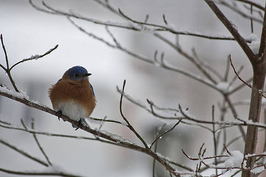 Teresa Mucha - Mr Bluebird
