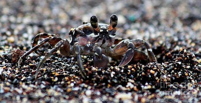 Mr. Crab by Jeff Sommerfield
