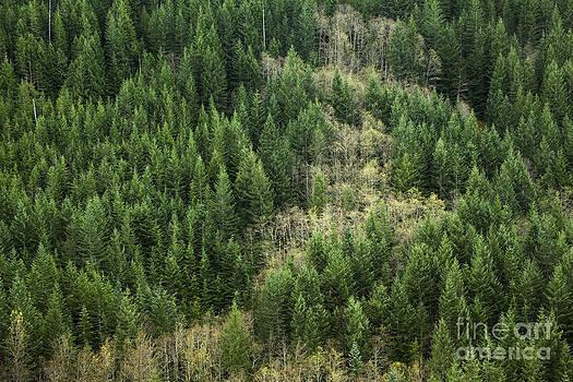 Charmian Vistaunet - Mt. Hood National Forest