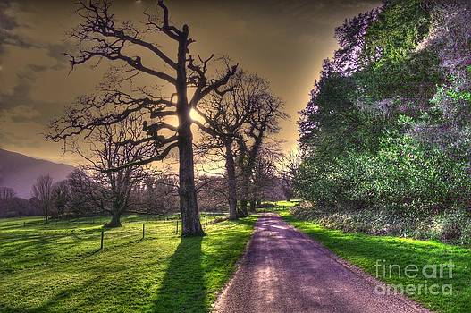 Muckross Park Kerry Ireland by Jo Collins