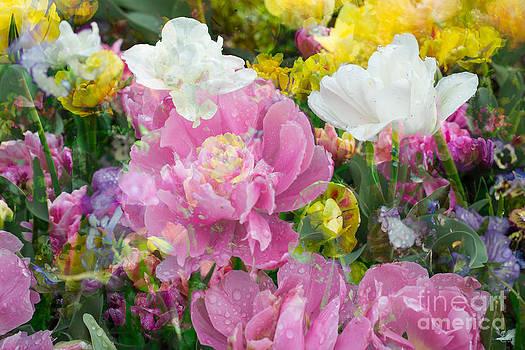 Sonja Quintero - Multi Blooms