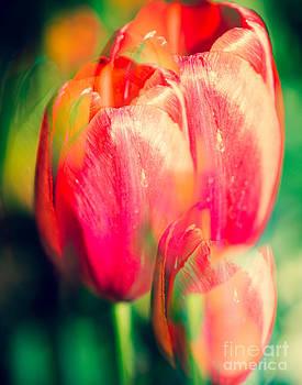 Sonja Quintero - Multiple Tulips
