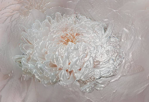 Mums of Pearl - Coral by Faye Giblin