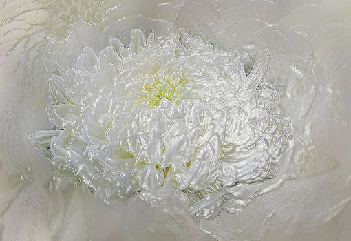 Mums of Pearl by Faye Giblin