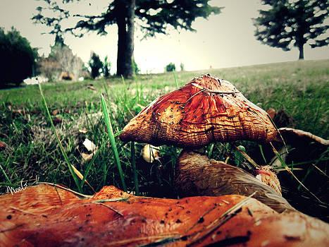 Mushroom by Noemie Grange