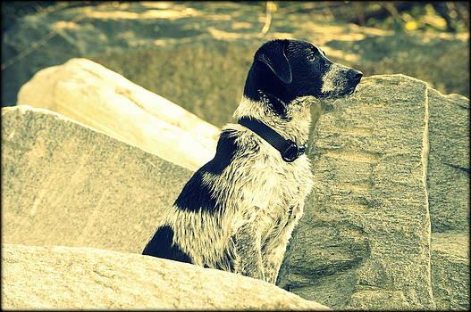 My Dog Aska by Saki Art