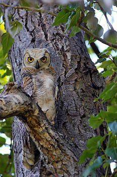My Eyes On You  by Ken Wilson